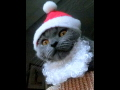 スウェーデン★猫とクリスマス